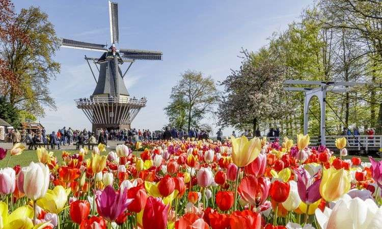 Keukenhof Gardens and the Land of Windmills